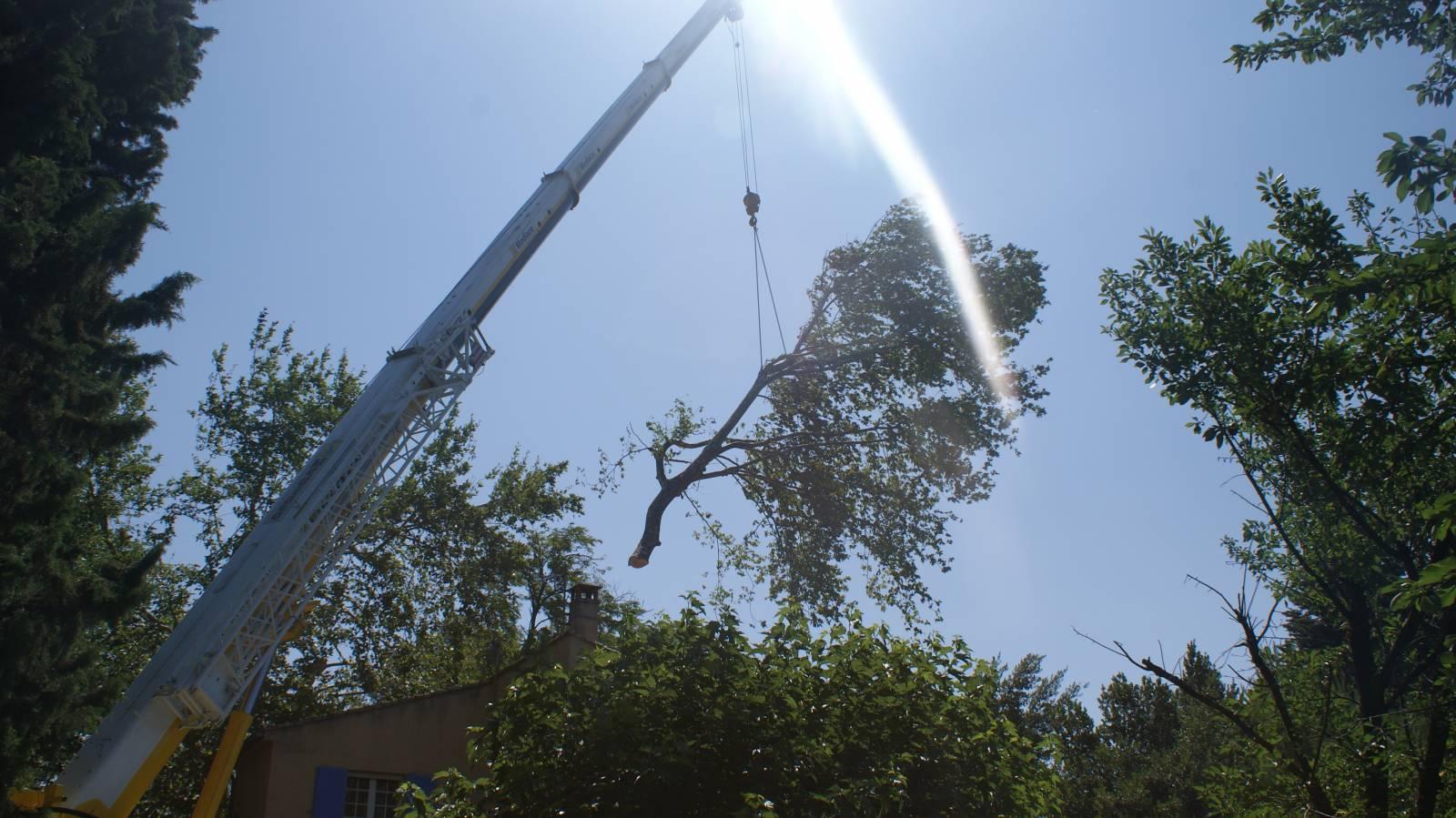 elagage de grands arbres en hauteur sur la r gion d 39 avignon vaucluse et alentours jardinier. Black Bedroom Furniture Sets. Home Design Ideas
