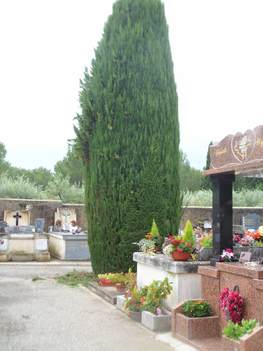 taille de cypr s en topiaire sur barbentane 13 jardinier paysagiste avignon entretien et. Black Bedroom Furniture Sets. Home Design Ideas